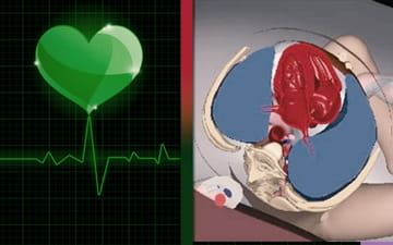 تفاوت اکوی قلب جنین با نوار قلب